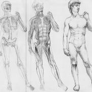Anatomy, Study